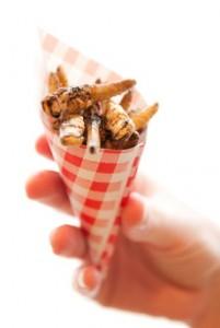 insecten-snack-Lotte-Stekelenburg